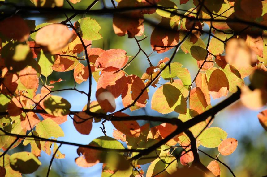 Herbstspaziergang der I.